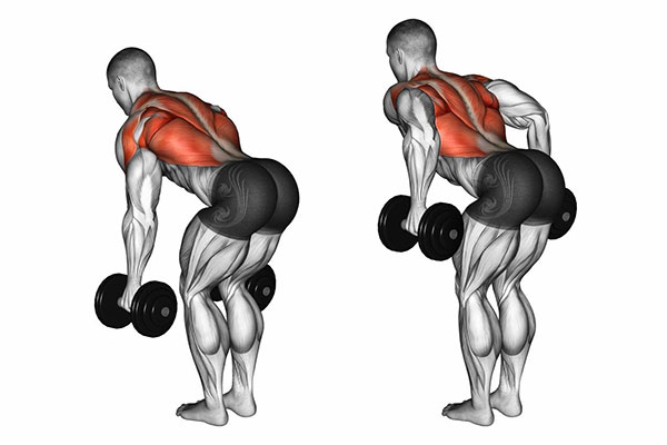 Bài tập Bent Over Two Dumbbell Row